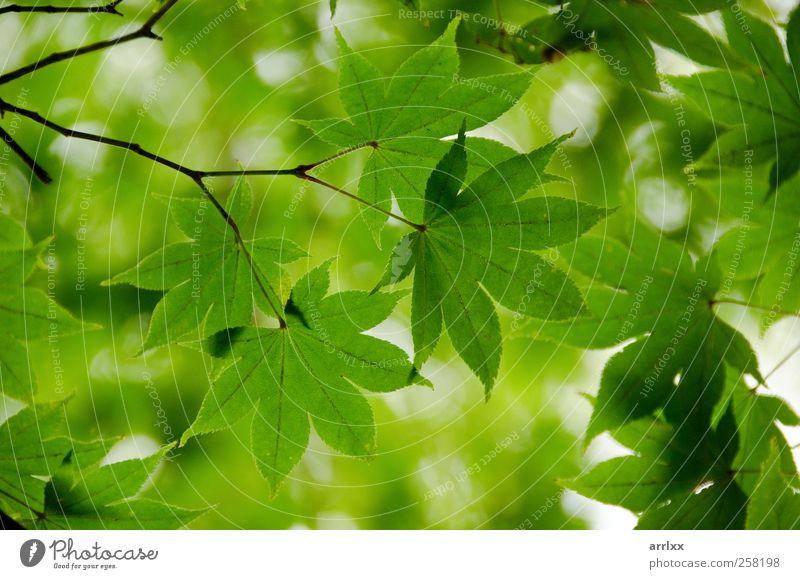 Natur Pflanze grün schön Sommer Blatt Berge u. Gebirge Umwelt Leben Herbst natürlich Hintergrundbild Park frisch Fröhlichkeit Klima