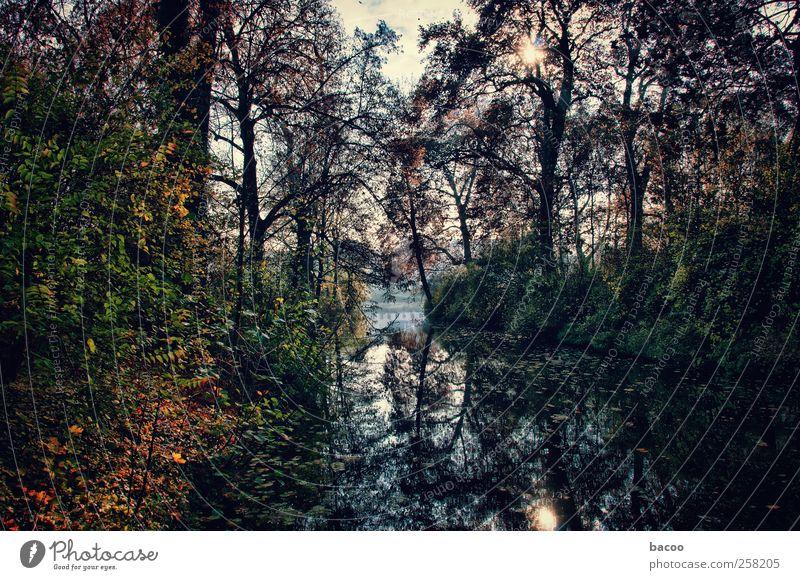 Brandenburg/Havel - Graben 01 Natur Pflanze Wasser Sonnenlicht Herbst Schönes Wetter Baum Sträucher Park Fluss blau braun gelb grün schwarz Romantik Farbfoto