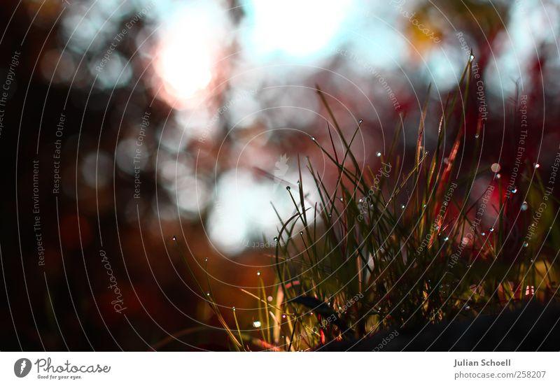 Sphärenhauch Pflanze Wassertropfen Sonne Herbst Schönes Wetter Gras Sträucher frisch glänzend Wärme blau grün rot schön Reinheit ästhetisch Idylle Farbfoto