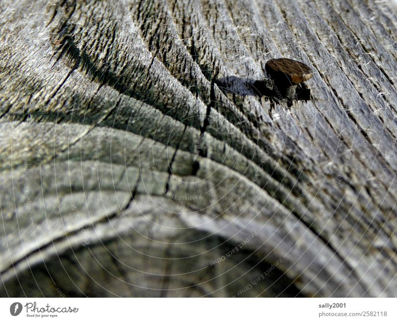 Zusammenhalt... Baum grau Holz Nagel Rost festhalten Jahresringe verwittert Astloch spreißel Farbfoto Außenaufnahme Menschenleer Tag