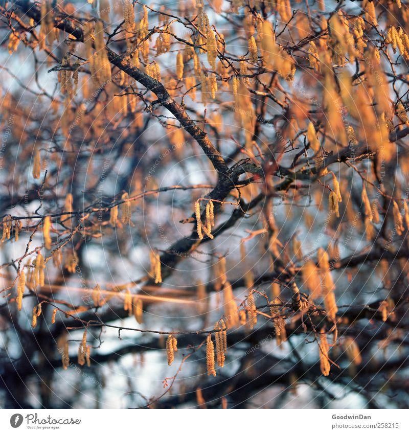 Focus. Natur schön Baum Pflanze Umwelt klein Park hell verrückt viele