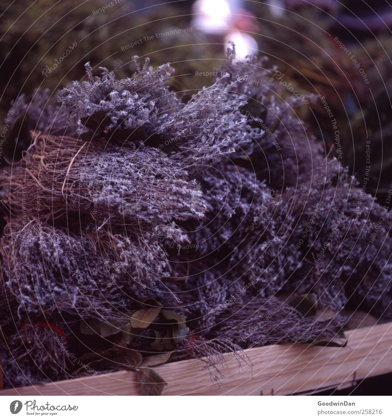 Der Duft Frankreichs. Markt Marktplatz Marktstand Kräuter & Gewürze Thymian Gesundheit Billig lecker natürlich schön Farbfoto Außenaufnahme Tag Licht