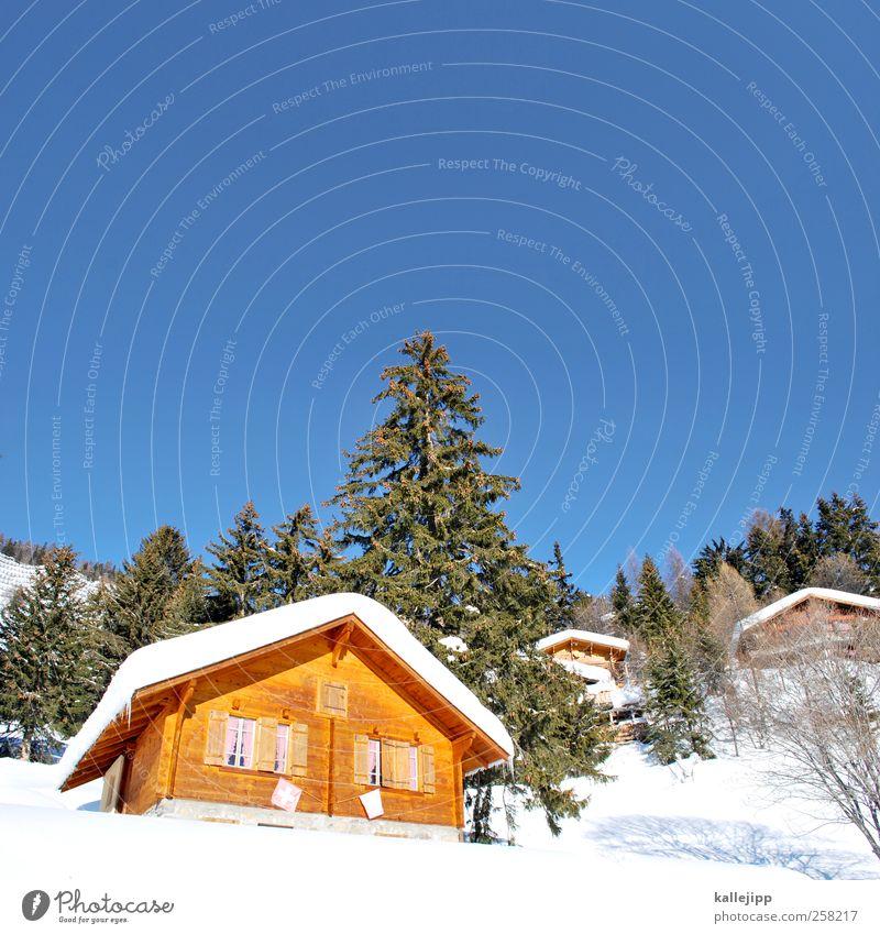 zimmer frei Lifestyle Freizeit & Hobby Ferien & Urlaub & Reisen Tourismus Winter Schnee Winterurlaub Umwelt Natur Landschaft Pflanze Tier Baum Wald Hügel Alpen