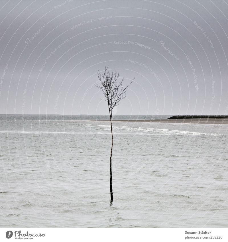 I Baum Meer Traurigkeit Wellen Kraft warten Klima stehen Nordsee Stress Im Wasser treiben graphisch Klimawandel Spiekeroog Überleben