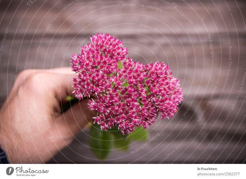 Blumengruß Garten Gartenarbeit Hand Finger Herz wählen festhalten einfach frisch schön rosa Lebensfreude Blütenblatt Blühend Blumenstrauß Gruß schenken Liebe