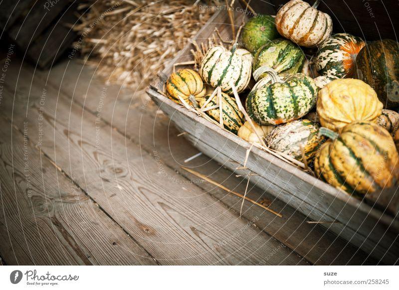 Pumpkinners gelb Herbst klein Feste & Feiern natürlich Lebensmittel Dekoration & Verzierung niedlich rund Gemüse Bioprodukte Tradition Kiste Korb herbstlich Holzfußboden