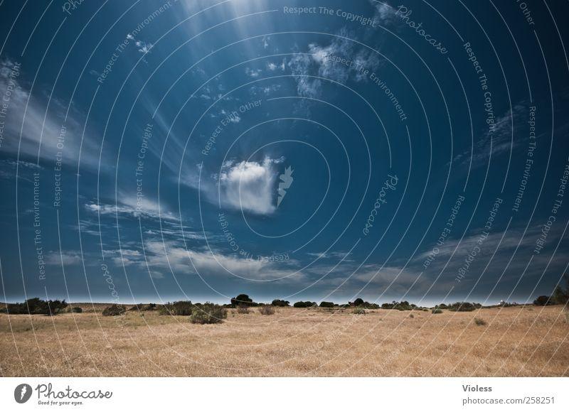 unendliche Weiten..... Natur Landschaft Pflanze Himmel Wolken Sommer Schönes Wetter Gras entdecken Erholung Freude Lebensfreude Ferien & Urlaub & Reisen