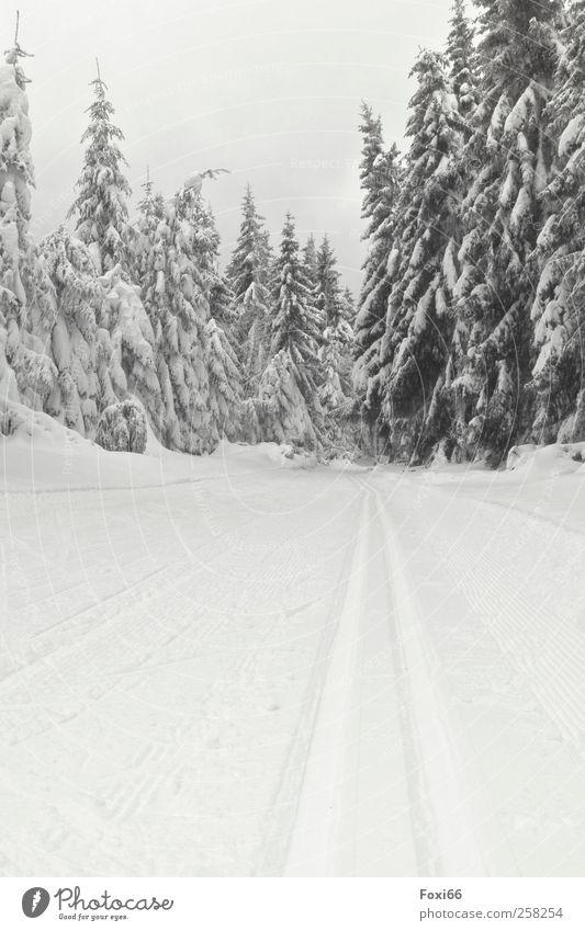 Thüringen loben Landschaft Luft Wasser Wolkenloser Himmel Winter Klima Eis Frost Schnee Baum Wald Holz Kristalle Bewegung laufen Sport kalt natürlich schwarz