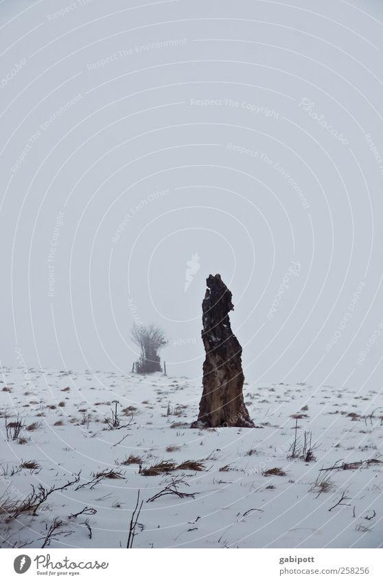 Baumloben | wenn man ihn sieht Natur weiß Baum Pflanze Ferien & Urlaub & Reisen Winter Ferne kalt Wiese Schnee Umwelt Landschaft Berge u. Gebirge grau Schneefall Eis