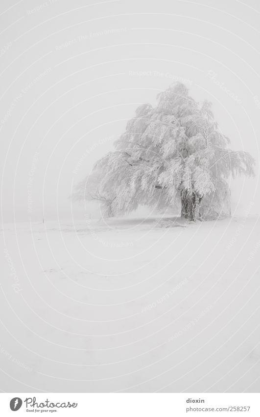 Baumloben | Winterbuchen Pt.1 Ferien & Urlaub & Reisen Ausflug Abenteuer Schnee Winterurlaub Umwelt Natur Landschaft Pflanze Klima Wetter schlechtes Wetter