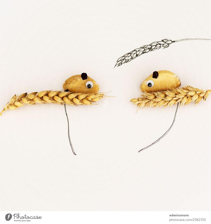 Small mice Freizeit & Hobby Basteln Erntedankfest Pflanze Nutzpflanze Tier Wildtier Maus 2 Papier Dekoration & Verzierung beobachten Blick stehen Zusammensein