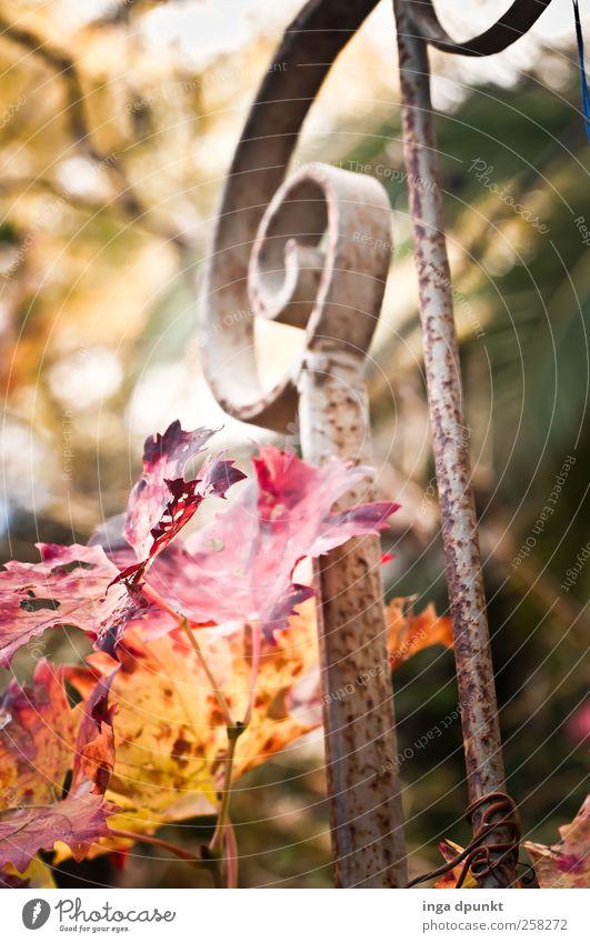 Herbstgeländer Natur rot Pflanze Blatt gelb Umwelt Landschaft Gefühle Garten Treppe Wachstum Wandel & Veränderung Vergänglichkeit Schönes Wetter Balkon