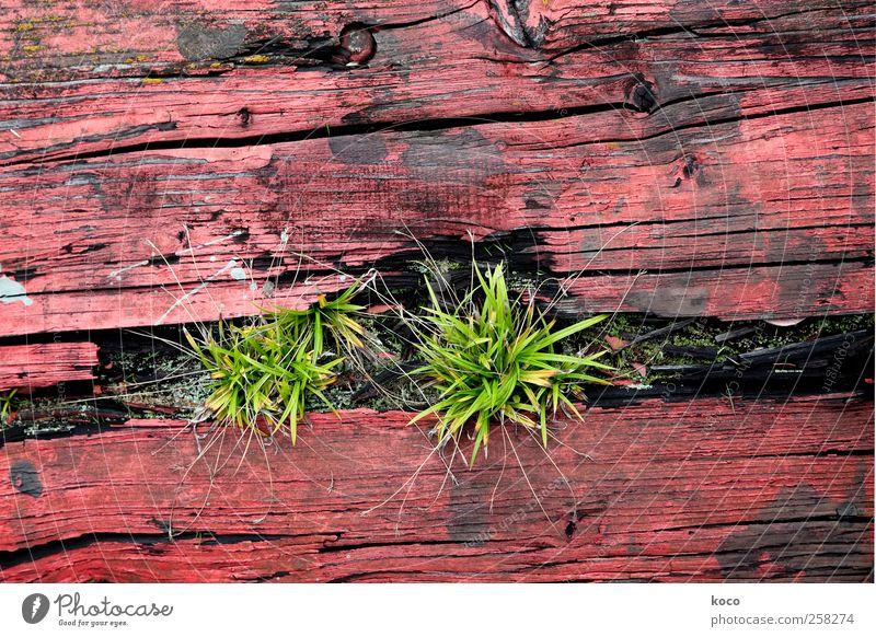 Siehst du das Gras wachsen? Natur Pflanze Frühling Sommer Holz Wachstum einfach natürlich trocken grün rot schwarz Optimismus authentisch Umwelt Verfall