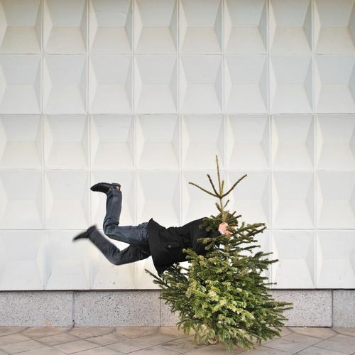 knut schlussverkauf Feste & Feiern Weihnachten & Advent Mensch Leben 1 Umwelt Natur Baum Mauer Wand Zeichen springen Weihnachtsbaum Baumschmuck Tanne