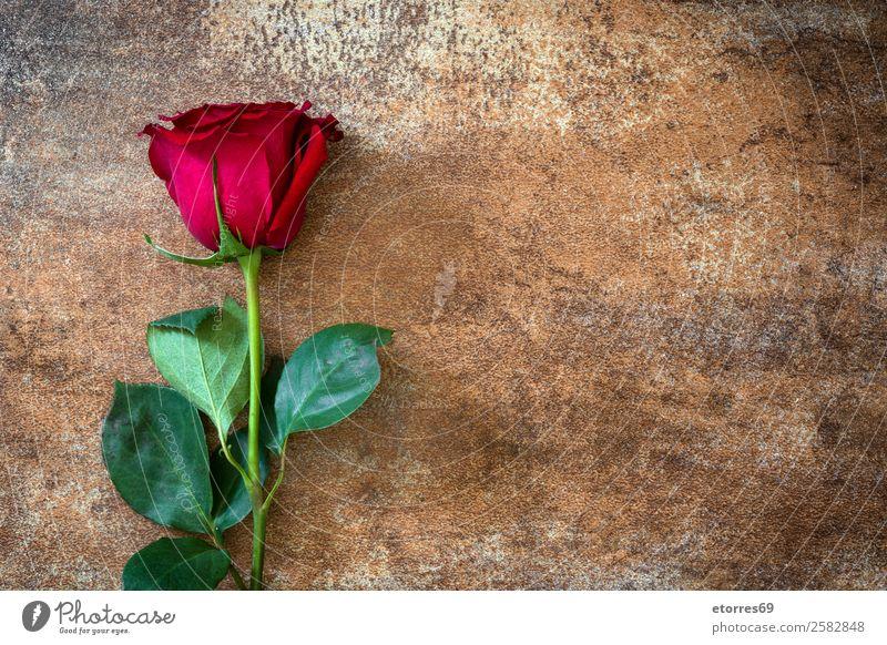 Rote Rosen auf rostigem Hintergrund Feste & Feiern Valentinstag Muttertag Hochzeit Blume natürlich rot Natur Romantik Liebe Rost Textfreiraum Blütenblatt Blatt