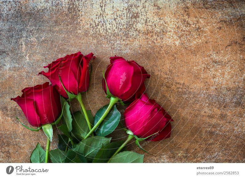 Rote Rosen Feste & Feiern Valentinstag Muttertag Hochzeit Blume natürlich rot Natur Romantik Liebe Rost Textfreiraum Blütenblatt Blatt Farbfoto Studioaufnahme