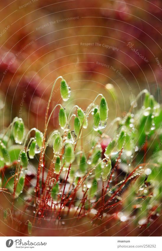 Kleinigkeit Natur grün braun natürlich nass Wassertropfen authentisch Moos