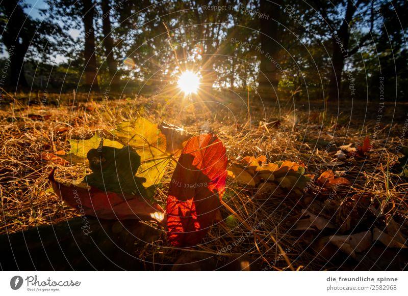 Der Herbst I Natur Landschaft Pflanze Wolkenloser Himmel Sonne Sonnenlicht Schönes Wetter Baum Gras Sträucher Grünpflanze Blatt Laubwald Park Wiese Wald Berlin