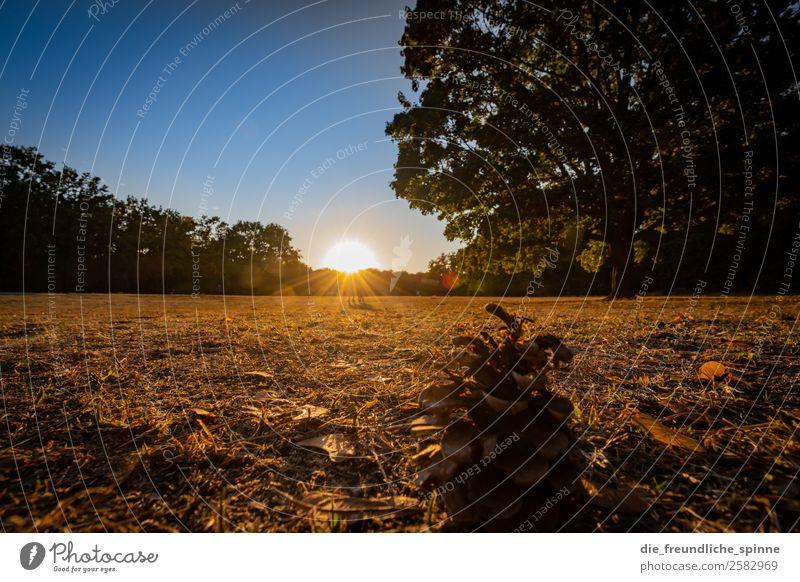 Der Herbst II Natur Landschaft Pflanze Himmel Wolkenloser Himmel Sonne Sonnenaufgang Sonnenuntergang Sonnenlicht Wetter Schönes Wetter Baum Gras Tannenzapfen