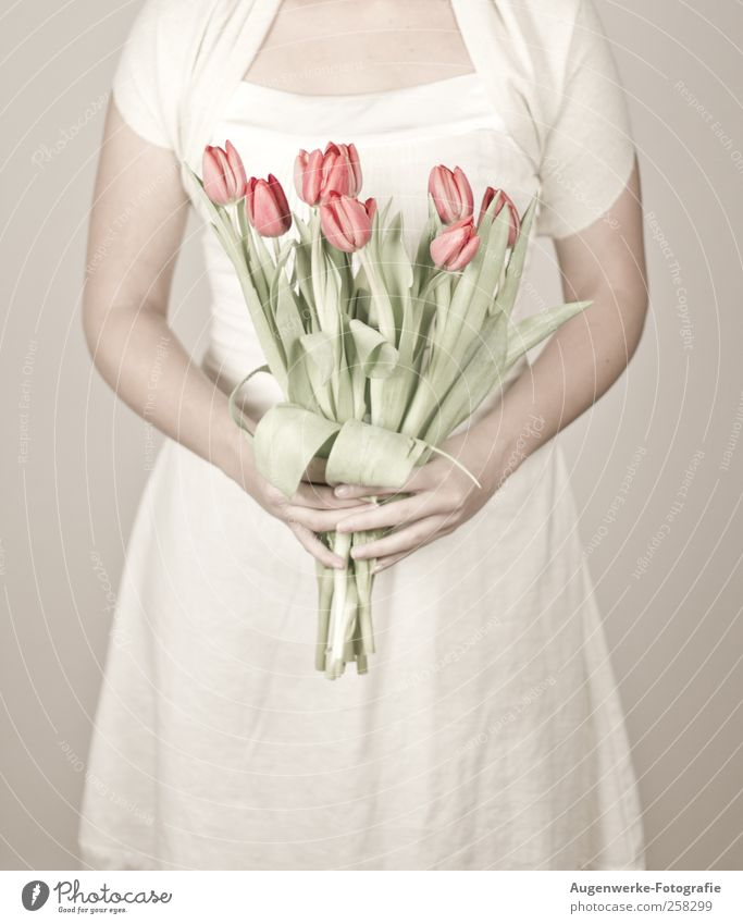 Soft tulips Mensch Jugendliche weiß Blume Erwachsene feminin Wärme Körper stehen weich 18-30 Jahre Kleid Junge Frau Tulpe