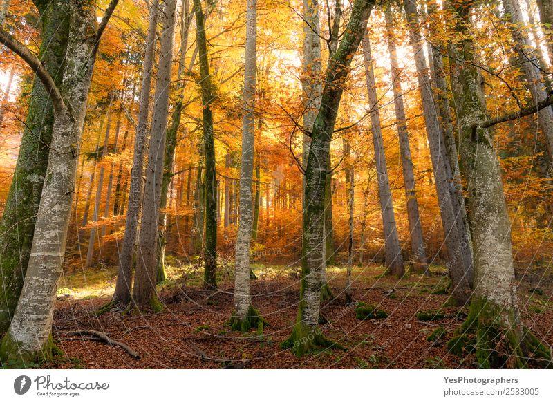 Natur Ferien & Urlaub & Reisen Baum Blatt Wald gelb Herbst natürlich Deutschland hell Park gold Europa Schönes Wetter Örtlichkeit Verzweiflung