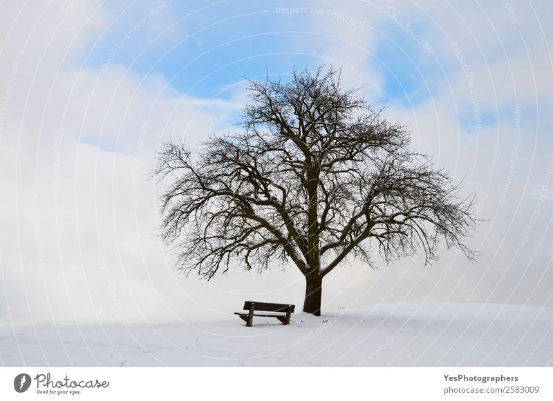 Himmel Natur Landschaft Baum Einsamkeit ruhig Winter natürlich Schnee Glück Deutschland hell Wetter Europa Schönes Wetter Unendlichkeit