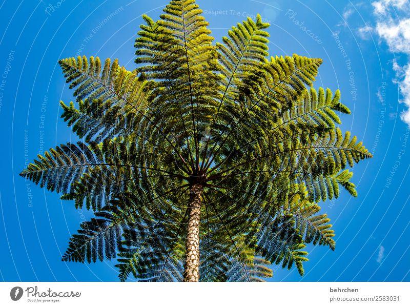 exotischer weihnachtsbaum;) Himmel Ferien & Urlaub & Reisen Natur Pflanze blau grün Landschaft Baum Wolken Blatt Ferne Berge u. Gebirge Tourismus