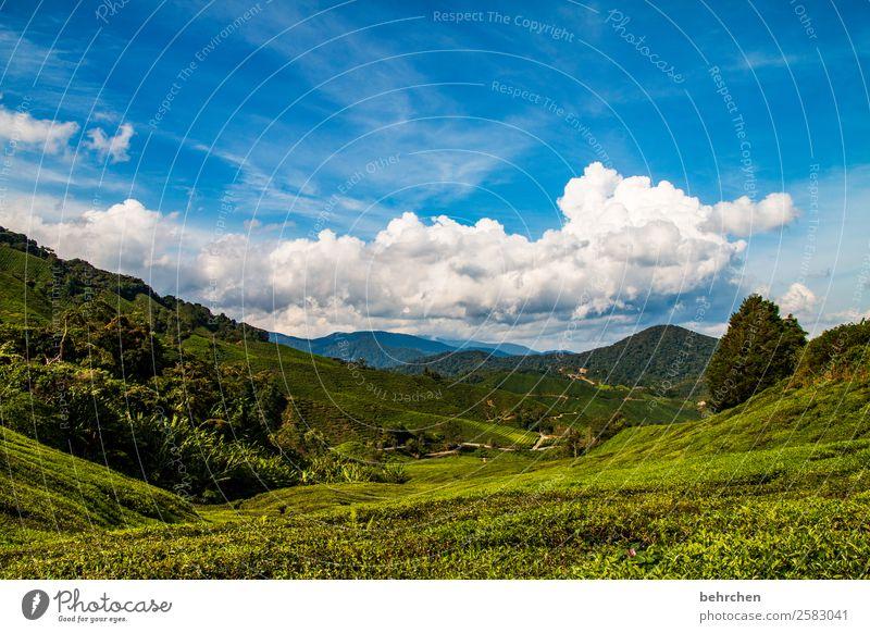 traumwölkchen Ferien & Urlaub & Reisen Tourismus Ausflug Abenteuer Ferne Freiheit Natur Landschaft Pflanze Baum Sträucher Teepflanze Feld Wald Urwald Hügel