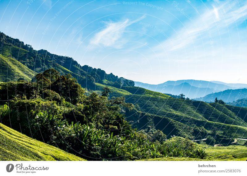 teeeechen Himmel Ferien & Urlaub & Reisen Natur Pflanze blau schön grün Landschaft Wolken Blatt Ferne Berge u. Gebirge Tourismus außergewöhnlich Freiheit