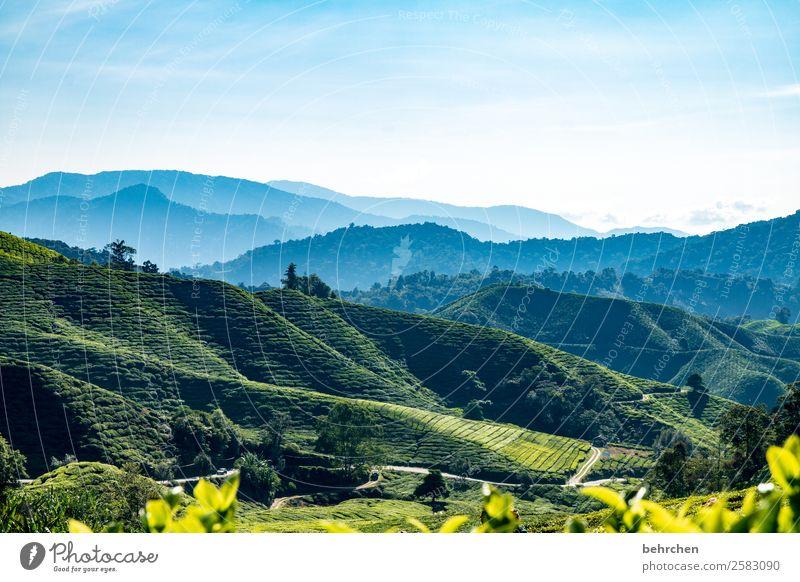 genuss pur Ferien & Urlaub & Reisen Tourismus Ausflug Abenteuer Ferne Freiheit Natur Landschaft Himmel Pflanze Baum Blatt Nutzpflanze Teepflanze Teeplantage