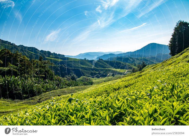 teatime Ferien & Urlaub & Reisen Tourismus Ausflug Abenteuer Ferne Freiheit Natur Landschaft Himmel Wolken Pflanze Baum Blatt Nutzpflanze Teepflanze Teeplantage