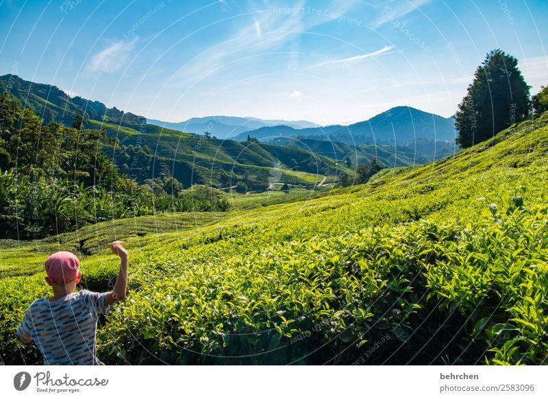 frei fühlen Kind Mensch Ferien & Urlaub & Reisen Natur Pflanze Landschaft Baum Blatt Ferne Berge u. Gebirge Glück Junge Tourismus Spielen außergewöhnlich