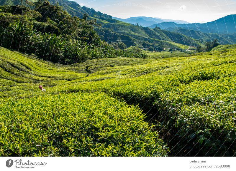 neue wege beschreiten Kind Mensch Ferien & Urlaub & Reisen Natur Pflanze grün Landschaft Baum Blatt Ferne Berge u. Gebirge Junge Tourismus außergewöhnlich