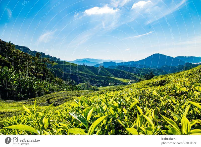 beruhigungstee Himmel Ferien & Urlaub & Reisen Natur Pflanze blau grün Landschaft Blatt Ferne Berge u. Gebirge Umwelt Tourismus außergewöhnlich Freiheit Ausflug
