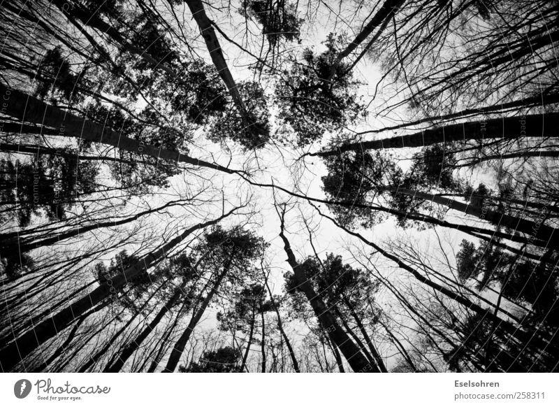 Schwindel Himmel Natur weiß Baum Winter schwarz Wald Angst hoch groß Stress Nervosität Schwindelgefühl