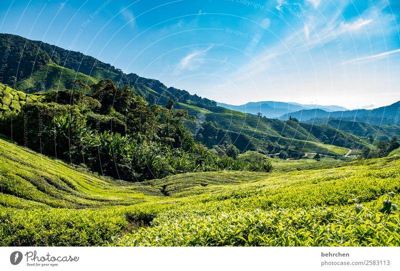 greenlovers Himmel Ferien & Urlaub & Reisen Natur Pflanze blau grün Landschaft Baum Blatt Ferne Berge u. Gebirge Tourismus außergewöhnlich Freiheit Ausflug Feld
