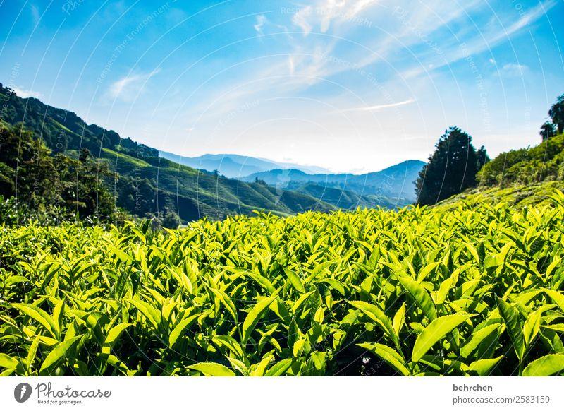it's teatime Himmel Ferien & Urlaub & Reisen Natur blau grün Landschaft Baum Wolken Blatt Ferne Berge u. Gebirge Tourismus außergewöhnlich Freiheit Ausflug Feld