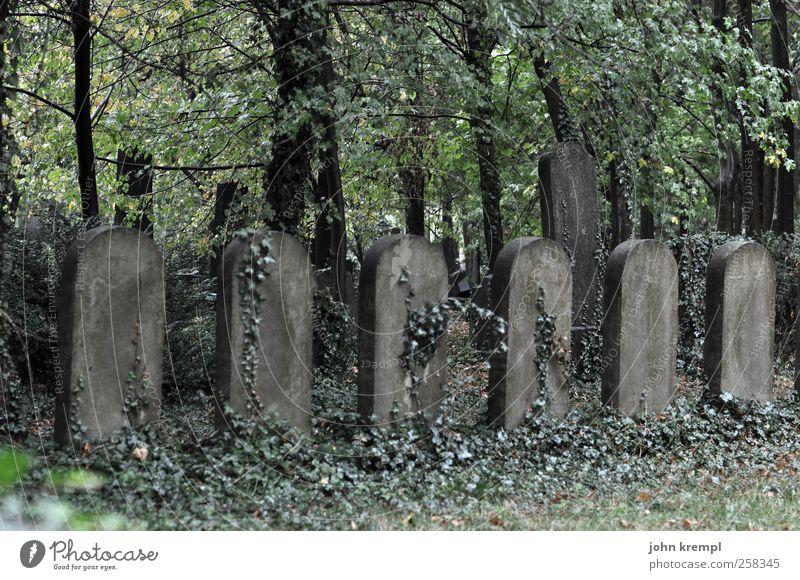 Rührt euch! Pflanze Baum Efeu Wien Österreich Ruine Friedhof Sehenswürdigkeit Grabstein Grabmal Stein Kreuz Wachstum dunkel gruselig historisch grau grün