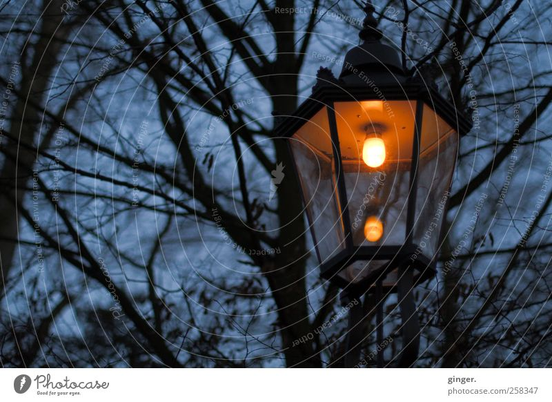 Irgendwo ist immer Licht Umwelt Natur Pflanze Himmel Winter schlechtes Wetter Regen Wärme Baum Park dunkel gruselig hell kalt trashig trist blau Lampe Laterne