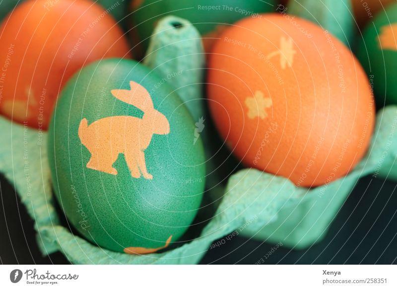 Frisch gestrichen Ei gelb grün Ostern Osterei Osterhase Eierkarton orange bemalt Farbfoto Menschenleer