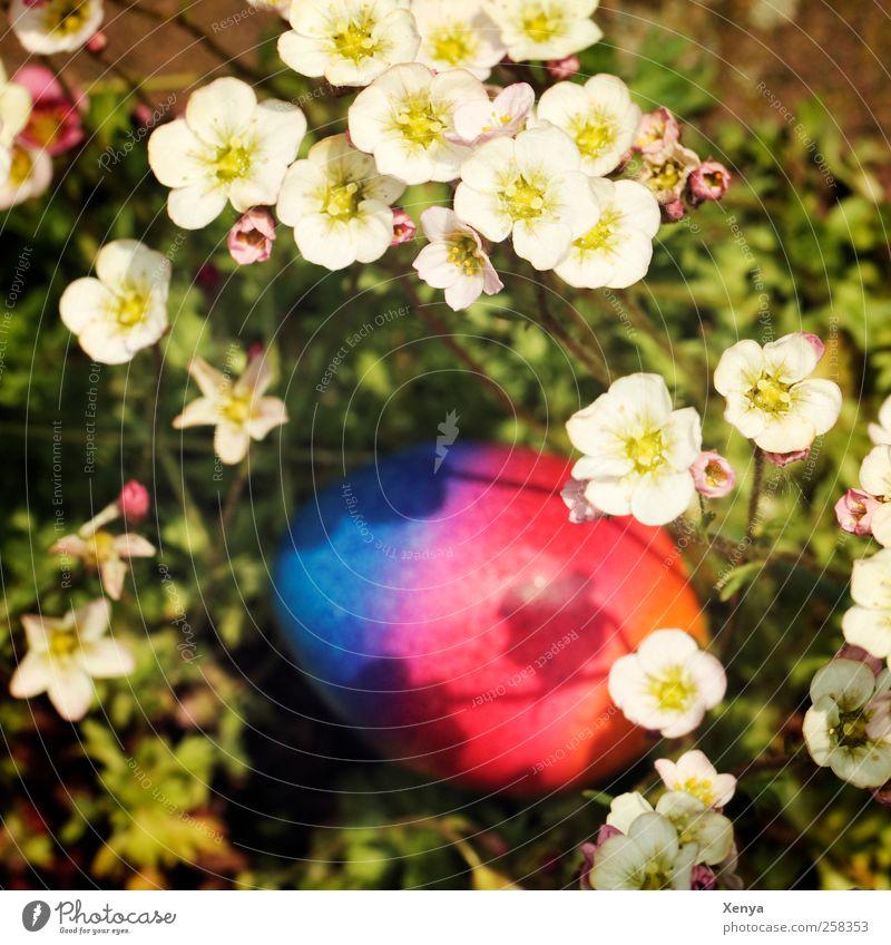 Hab eins! Osterei blau mehrfarbig rot verstecken Ostern orange Versteck Farbfoto Menschenleer Unschärfe