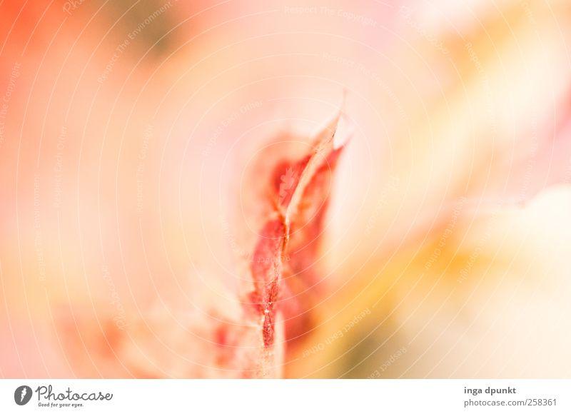 Ungewiss Natur Pflanze Erholung rot Blatt Umwelt Horizont träumen leuchten Beginn Idee Wandel & Veränderung Hoffnung Jahreszeiten Glaube Inspiration