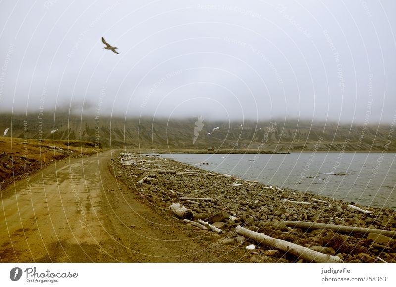Island Umwelt Natur Landschaft Tier Erde Himmel Wolken Klima Küste Fjord Westfjord Straße Wege & Pfade Wildtier Vogel außergewöhnlich wild Stimmung Abenteuer