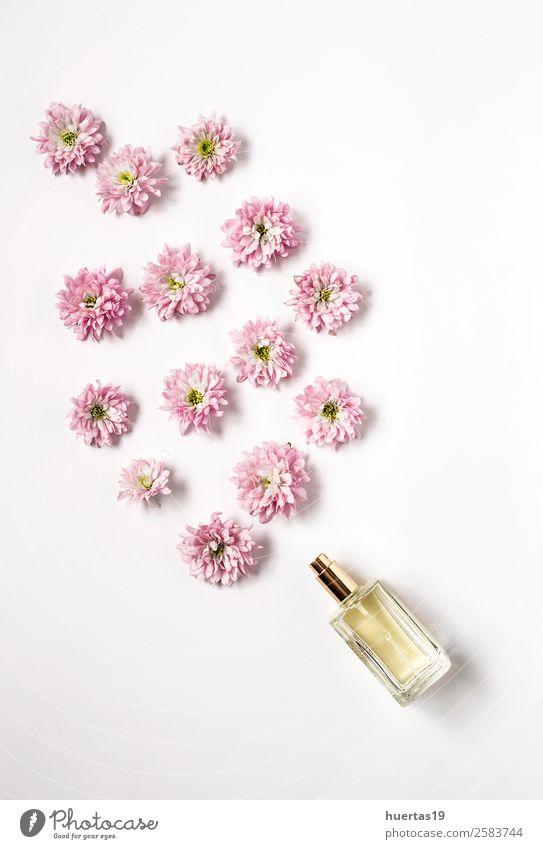 Natur Pflanze Farbe Blume natürlich Stil Textfreiraum oben Design elegant Postkarte violett Blumenstrauß Körperpflege Schminke Valentinstag