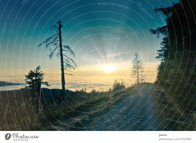 Am Ende des Tages Natur Landschaft Wolken Horizont Sonne Sonnenaufgang Sonnenuntergang Sonnenlicht Schönes Wetter Baum Wald Wege & Pfade hoch schön blau gelb