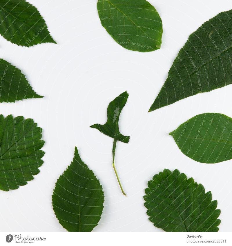 Natur Pflanze grün Baum Tier Blatt Wald Umwelt Kunst Vogel fliegen Luft Wildtier Umweltschutz nachhaltig Basteln