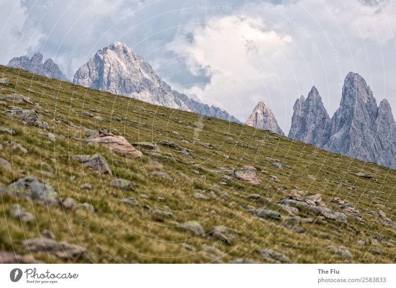 Almenrausch an den Geislerspitzen Ferien & Urlaub & Reisen Tourismus Ausflug Ferne Freiheit Sommer Sommerurlaub Berge u. Gebirge wandern Natur Landschaft Wolken