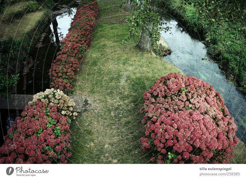 bretagne Natur grün Baum Pflanze Blume Wiese Gras Garten rosa natürlich Steg Bach Rhododendron