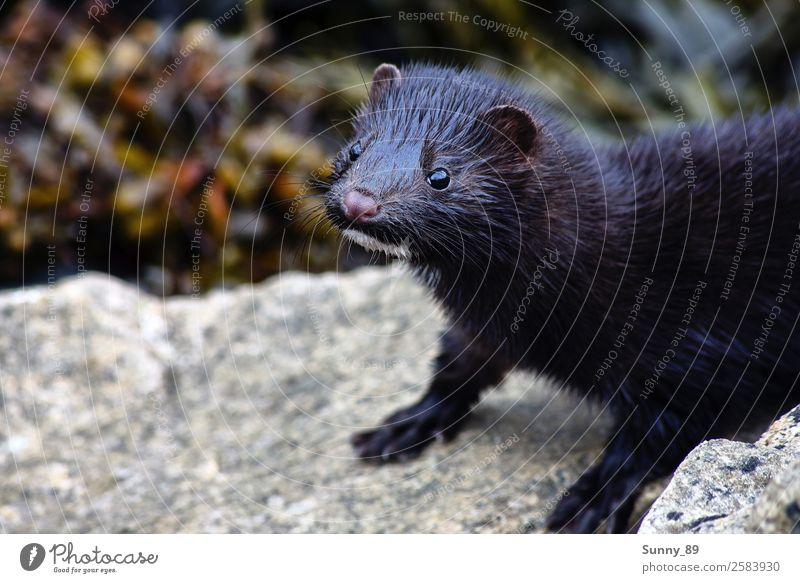 Otter Tier Wildtier Tiergesicht Fell Pfote 1 beobachten frech Neugier Farbfoto mehrfarbig Außenaufnahme Makroaufnahme Tag Starke Tiefenschärfe Vogelperspektive