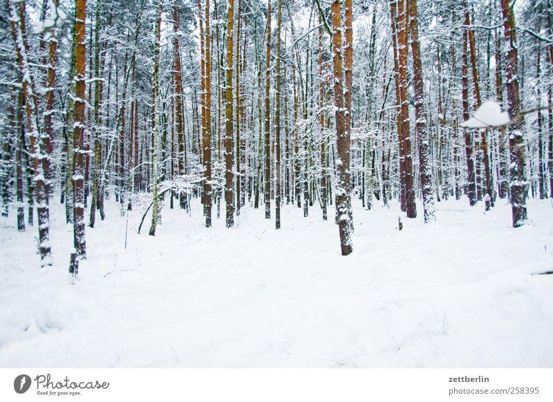 Winterhof Umwelt Natur Landschaft Pflanze Klima Klimawandel Wetter Eis Frost Schnee Baum Grünpflanze Wald kalt Berlin Dezember Nadelwald Baumstamm Schneedecke